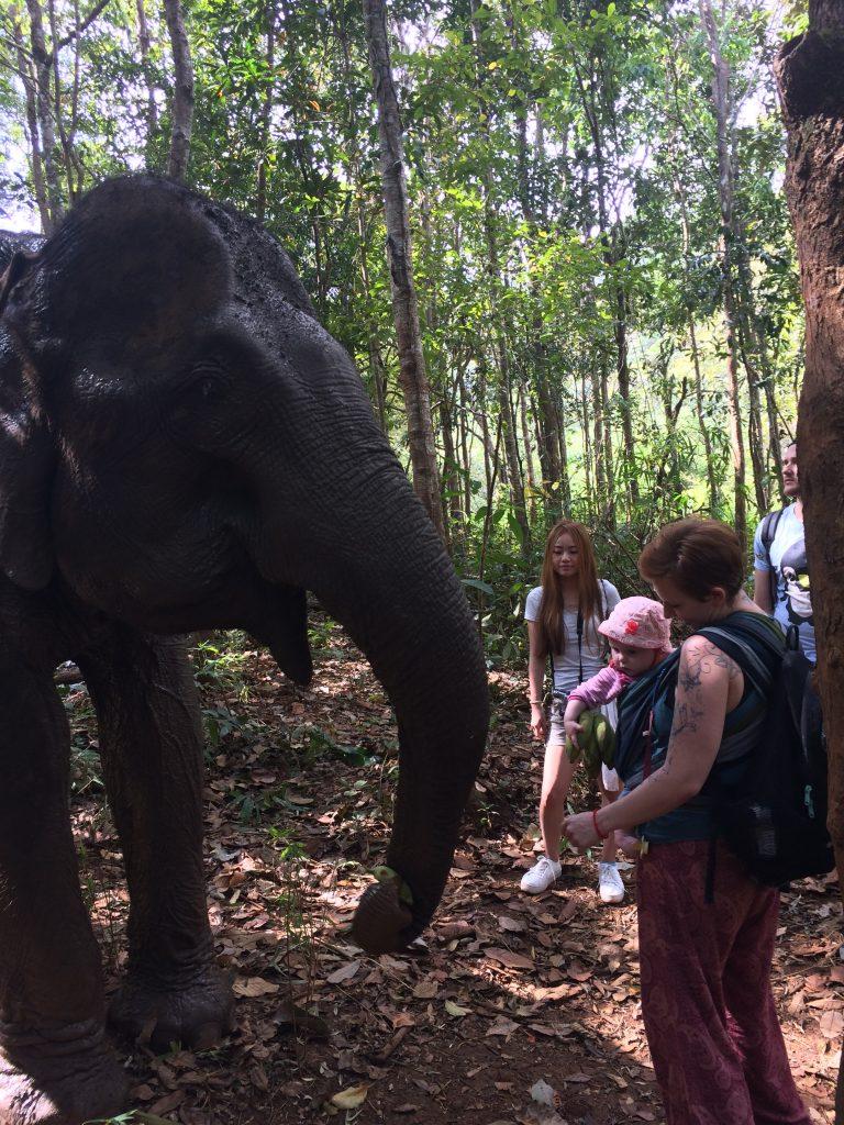zweiumdiewelt.de Elefant - sind so kleine Hände